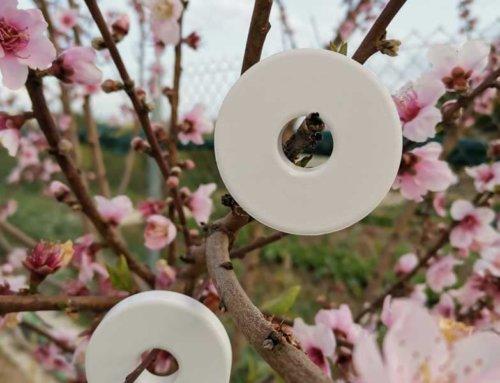 Primavera, flores, cerámica perfumada y otras curiosidades